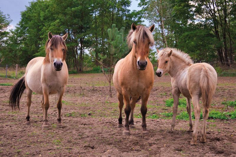 Seenlandfarm Pferde und Reiten